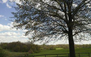 cropped-magictree1.jpg