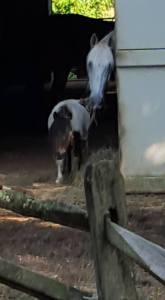 horsewisdom